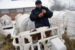 Ветврач Гасан Курбанов  делает прививку маленькому пациенту.